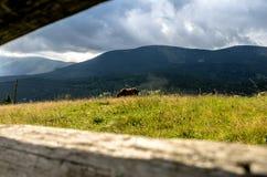 Ένα άλογο βόσκει στον τομέα Ένα άλογο τρώει τη χλόη Στοκ Εικόνες
