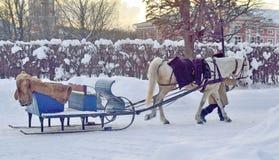 Ένα άλογο που σύρεται για τους οδηγώντας τουρίστες στο φέουδο Kuskovo, Μόσχα, Russ Στοκ Εικόνες