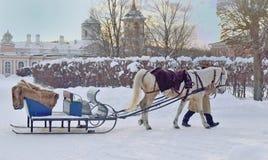 Ένα άλογο που σύρεται για τους οδηγώντας τουρίστες στο φέουδο Kuskovo, Μόσχα, Russ Στοκ Εικόνα