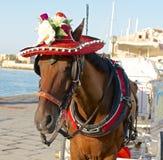 Ένα άλογο σε ένα καπέλο Στοκ Εικόνες