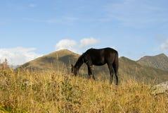Ένα άλογο σε ένα λιβάδι βουνών στοκ φωτογραφία