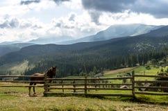 Ένα άλογο στο υπόβαθρο των βουνών Ένα άλογο στη φύση Στοκ φωτογραφία με δικαίωμα ελεύθερης χρήσης