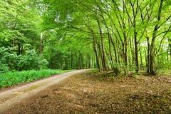 Ένα δάσος δέντρων οξιών Στοκ Εικόνες