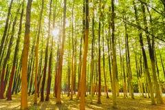 Ένα δάσος με τα δέντρα που χρωματίζονται στα διαφορετικά χρώματα Στοκ Φωτογραφία