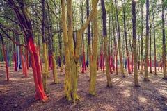 Ένα δάσος με τα δέντρα που χρωματίζονται στα διαφορετικά χρώματα Στοκ εικόνες με δικαίωμα ελεύθερης χρήσης