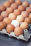 Ένα άσπρο αυγό στην κατακόρυφο κιβωτίων Στοκ Φωτογραφία