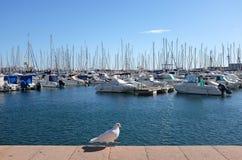 Ένα άσπρο περιστέρι στη Μεσόγειο στο υπόβαθρο ηλιοφάνειας στοκ εικόνα με δικαίωμα ελεύθερης χρήσης