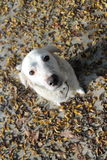 Ένα άσπρο σκυλί Στοκ εικόνα με δικαίωμα ελεύθερης χρήσης
