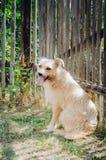 Ένα άστεγο σκυλί κάθεται κοντά σε έναν ξύλινο φράκτη στην οδό Η έννοια της ζωικής προστασίας στοκ φωτογραφία με δικαίωμα ελεύθερης χρήσης