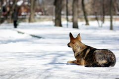 Ένα άστεγο σκυλί ââ Στοκ εικόνες με δικαίωμα ελεύθερης χρήσης