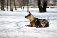 Ένα άστεγο σκυλί ââ Στοκ Εικόνες
