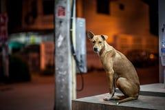 Ένα άστεγο σκυλί Στοκ Φωτογραφία