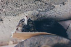 Ένα άτακτο γκρίζο γατάκι που κρύβεται πίσω από το εμπορευματοκιβώτιο με το ασυνήθιστο σημείο εάν άποψη στοκ εικόνα