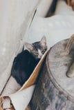 Ένα άτακτο γκρίζο γατάκι που κρύβεται πίσω από το εμπορευματοκιβώτιο στοκ εικόνες