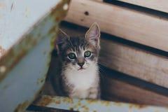 Ένα άτακτο γκρίζο γατάκι στα ξύλινα κιβώτια στοκ φωτογραφία