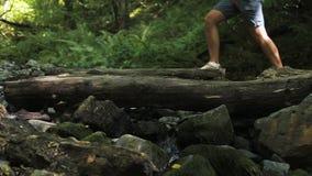 Ένα άτομο διασχίζει τον ποταμό βουνών κατά μήκος ενός πεσμένου δέντρου Περιπέτειες και ακραίος τουρισμός, που υπερνικούν τα εμπόδ απόθεμα βίντεο