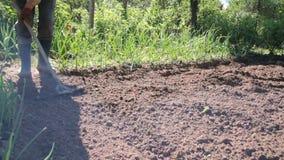 Ένα άτομο είναι αγρότης στις λαστιχένιες μπότες στην προαστιακή περιοχή, ένας φυτικός κήπος, με τη βοήθεια μιας σκαπάνης που περι απόθεμα βίντεο