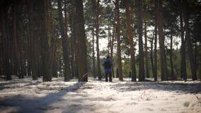 Ένα άτομο είναι τουρίστας σε ένα δάσος πεύκων με ένα σακίδιο πλάτης Ένας νέος ταξιδιώτης σε ένα πεζοπορώ το χειμώνα Δραστηριότητα φιλμ μικρού μήκους