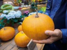 Ένα άτομο επιλέγει μια κολοκύθα στην αγορά Πορτοκαλιά κολοκύθα στα χέρια Στοκ φωτογραφίες με δικαίωμα ελεύθερης χρήσης