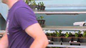 Ένα άτομο εργάζεται σε ένα θερμοκήπιο με τα λουλούδια, δοχεία λουλουδιών, εργασία σε ένα θερμοκήπιο, ροή της δουλειάς σε ένα θερμ φιλμ μικρού μήκους