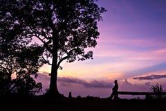 Ένα άτομο και μια μεγάλη σκιαγραφία δέντρων Στοκ Φωτογραφία