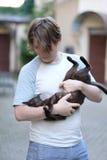 Ένα άτομο κρατά μια σιαμέζα εσωτερική γάτα Στοκ Φωτογραφίες