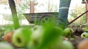 Ένα άτομο κυλά ένα κάρρο κήπων στο dacha για το λίπασμα φόρτωσης φιλμ μικρού μήκους