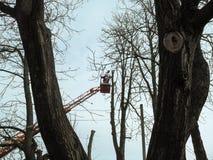 Ένα άτομο με ένα αλυσιδοπρίονο στέκεται σε μια εναέρια πλατφόρμα εργασίας στην απόσταση, μεταξύ των δέντρων Η έννοια της άνοιξης  στοκ εικόνες
