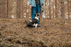 Ένα άτομο με ένα πιό bullterrier σκυλί tricolor miini στον περίπατο στο δάσος στοκ εικόνα