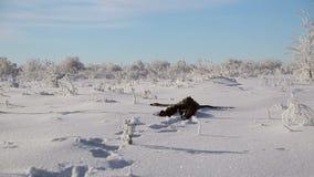 Ένα άτομο πέφτει στο χιόνι απόθεμα βίντεο