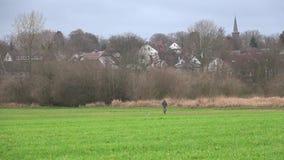 Ένα άτομο παίζει με ένα σκυλί Ρίχνει μια σφαίρα σε την πράσινο λιβάδι απόθεμα βίντεο