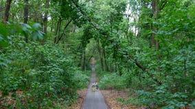 Ένα άτομο περπατά, αυξάνεται επάνω στο δρόμο, στο δάσος, οδηγεί ένα ποδήλατο με ένα παιδί, το παιδί κάθεται σε μια ειδική καρέκλα απόθεμα βίντεο