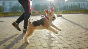 Ένα άτομο περπατά γύρω από την πόλη με το σκυλί του σε ένα λουρί απόθεμα βίντεο