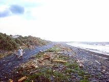 Ένα άτομο που επιλέγουν driftwood και περίπατος κοντά στην παραλία Στοκ εικόνα με δικαίωμα ελεύθερης χρήσης