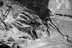 Ένα άτομο που καλύπτεται στη λάσπη Στοκ Φωτογραφίες