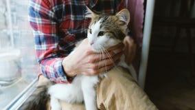 Ένα άτομο που κτυπά μια γάτα στα γόνατά του απόθεμα βίντεο