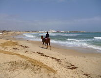 Ένα άτομο που οδηγά σε μια καμήλα σε μια κενή παραλία Στοκ Εικόνα