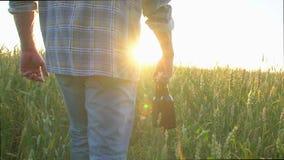 Ένα άτομο που περπατά σε έναν τομέα σίτου με δύο μπουκάλια της μπύρας μια καυτή ημέρα πόλη ηλιοβασιλέματος βουνών sim ural Φλόγα  απόθεμα βίντεο