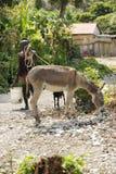 Ένα άτομο που περπατά τα ζώα του Στοκ εικόνα με δικαίωμα ελεύθερης χρήσης