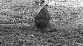 Ένα άτομο που σκάβει με ένα φτυάρι απόθεμα βίντεο