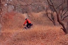 Ένα άτομο σε ένα ποδήλατο Στοκ Εικόνες
