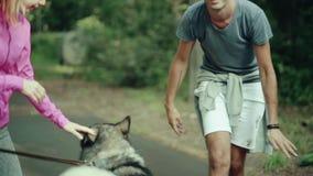 Ένα άτομο στο πάρκο που κτυπά ένα σκυλί απόθεμα βίντεο