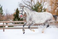 Ένα άλογο με τρεξίματα ενός τα όμορφα χρώματος πέρα από τον τομέα Στοκ φωτογραφίες με δικαίωμα ελεύθερης χρήσης