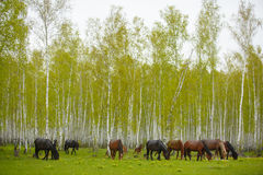 Ένα άλογο σε ένα δασικό ξέφωτο Μια φωτεινή θερινή φωτογραφία Η φύση του χωριού, στοκ φωτογραφίες με δικαίωμα ελεύθερης χρήσης