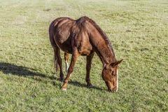 Ένα άλογο στο λιβάδι στοκ εικόνες με δικαίωμα ελεύθερης χρήσης