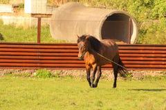 Ένα άλογο στο ναυπηγείο Στοκ φωτογραφία με δικαίωμα ελεύθερης χρήσης