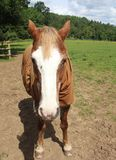 Ένα άλογο Στοκ φωτογραφίες με δικαίωμα ελεύθερης χρήσης