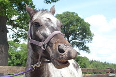 Ένα άλογο Στοκ Φωτογραφίες