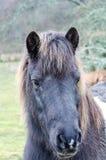 Ένα άλογο Στοκ Φωτογραφία