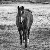 Ένα άλογο Στοκ Εικόνα